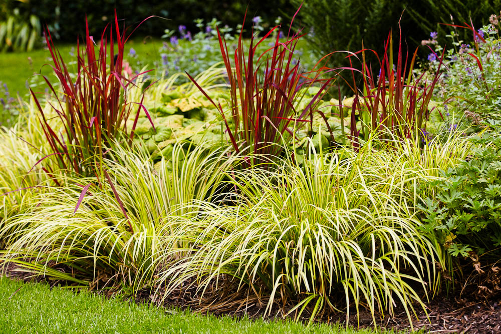 Ornamental grasses simpson landscape for Decorative grasses