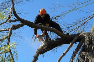 Tree Pruning - Simpson Landscape