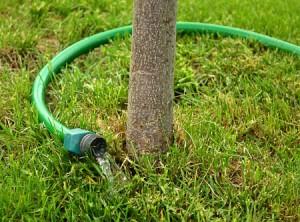 Tree Watering - Simpson Landscape
