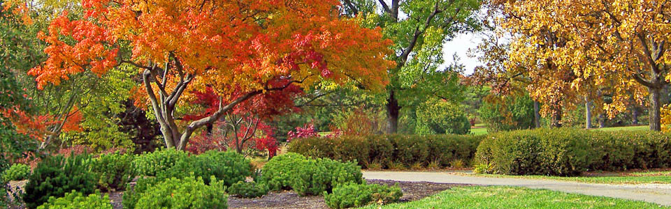 Landscaping Lesson: Preparing Your Trees for Winter