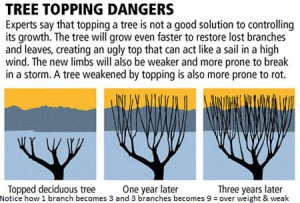 Tree Topping Dangers