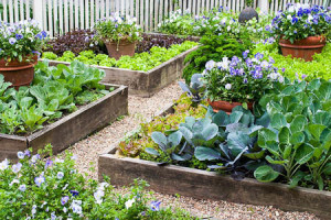 Raised Bed Garden - Simpson Landscape